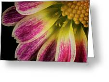 Little Flower Quadrant Greeting Card