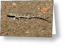 Little Gecko Greeting Card