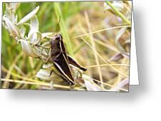 Little Grasshopper 2 Greeting Card