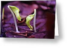 Little Green Sprouts  Greeting Card