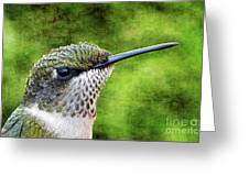 Little Hummer Greeting Card