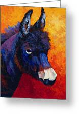 Little Jack - Burro Greeting Card