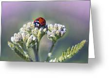 Little Lady On Top Greeting Card by Bill Tiepelman