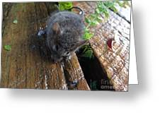 Little 'mighty Mouse' Greeting Card