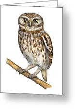 Little Owl Or Minerva's Owl Athene Noctua - Goddess Of Wisdom- Chouette Cheveche- Nationalpark Eifel Greeting Card