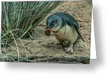 Little Penguin Greeting Card