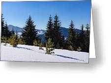 Little Pine Forest - Impressions Of Mountains Greeting Card