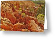 Little Pine Trees Growing On The Valley Cliffs Greeting Card