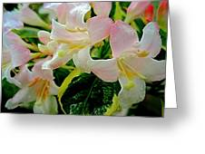 Little Pink And White Flowers Greeting Card