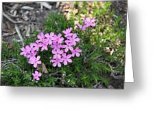 Little Pink Flowers Greeting Card