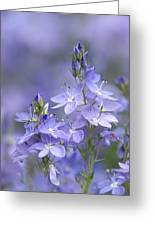 Little Purple Flowers Vertical Greeting Card