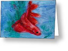Little Red Betta Fish Greeting Card by Brenda Thour