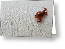 Little Red Guy Greeting Card by JAMART Photography