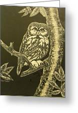 Little Saw-whet  Sold Greeting Card