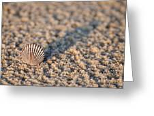 Little Seashell - Jersey Shore Greeting Card
