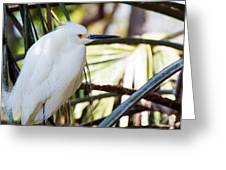 Little Snowy Egret Greeting Card