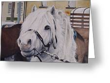 Little Stallion-glin Fair Greeting Card