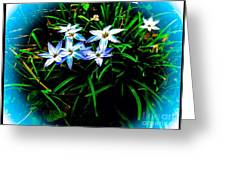 Little Star Wind Flowers Greeting Card