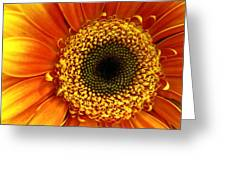 Little Sun Greeting Card