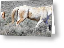 Little Tail Gater Greeting Card