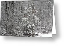 Little Tree Big Snow Greeting Card
