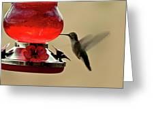 Little Winged Wonder Greeting Card