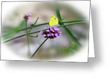 Little Yellow Butterfly On Verbena Greeting Card
