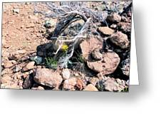Little Yellow Flower In The Wild Greeting Card