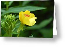 Little Yellow Flower Greeting Card