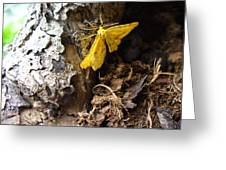 Little Yellow Moth Greeting Card