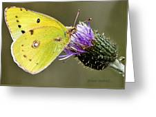 Little Yellow On Bullthistle Greeting Card