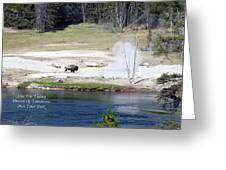 Live Dream Own Yellowstone Park Bison Text Greeting Card