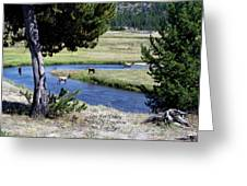 Live Dream Own Yellowstone Park Elk Herd Text Greeting Card