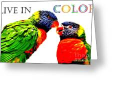 Live In Color Greeting Card