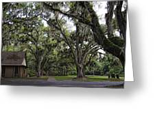 Live Oak And Spanis Moss Landscape Greeting Card