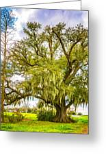 Live Oak And Spanish Moss 2 - Paint Greeting Card