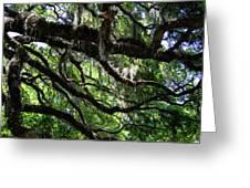 Live Oak Greeting Card