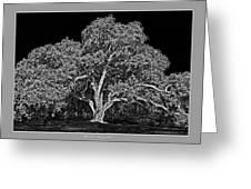 Live Oak At Hogan's Hole- Lion's Golf Course Greeting Card