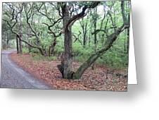 Live Oak Forest Greeting Card