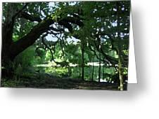 Live Oak Hidden Pond Greeting Card