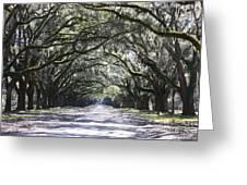 Live Oak Lane In Savannah Greeting Card