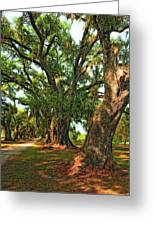 Live Oak Lane Greeting Card by Steve Harrington
