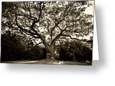 Live Oak Tree With Spanish Moss Greeting Card