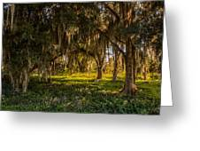 Live Oak Tree Greeting Card