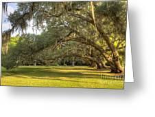Live Oak Trees Sunrise Greeting Card