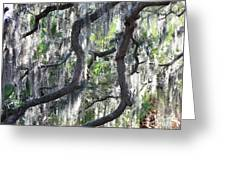 Live Oak With Spanish Moss And Palms Greeting Card