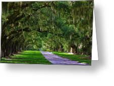 Live Oaks Greeting Card