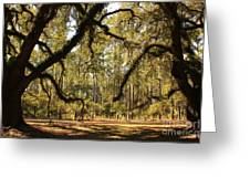 Live Oaks Silhouette Greeting Card
