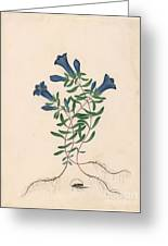 Liverpool Gentian With One Insect Greeting Card