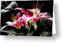 Living In Color Greeting Card